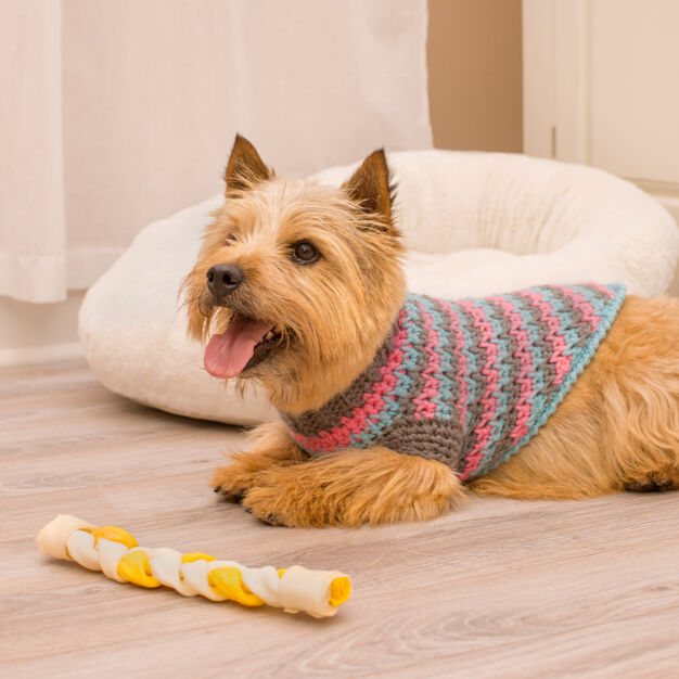Red Heart La-di-da Dog Sweater, S