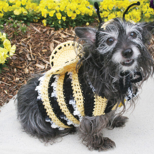 Red Heart Dog's Crochet Bumble Bee Costume, S in color