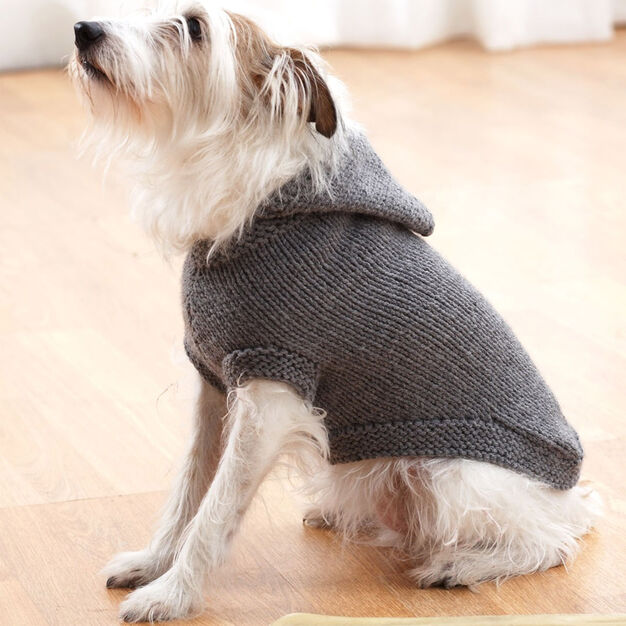 Hooded Dog Knitting Pattern
