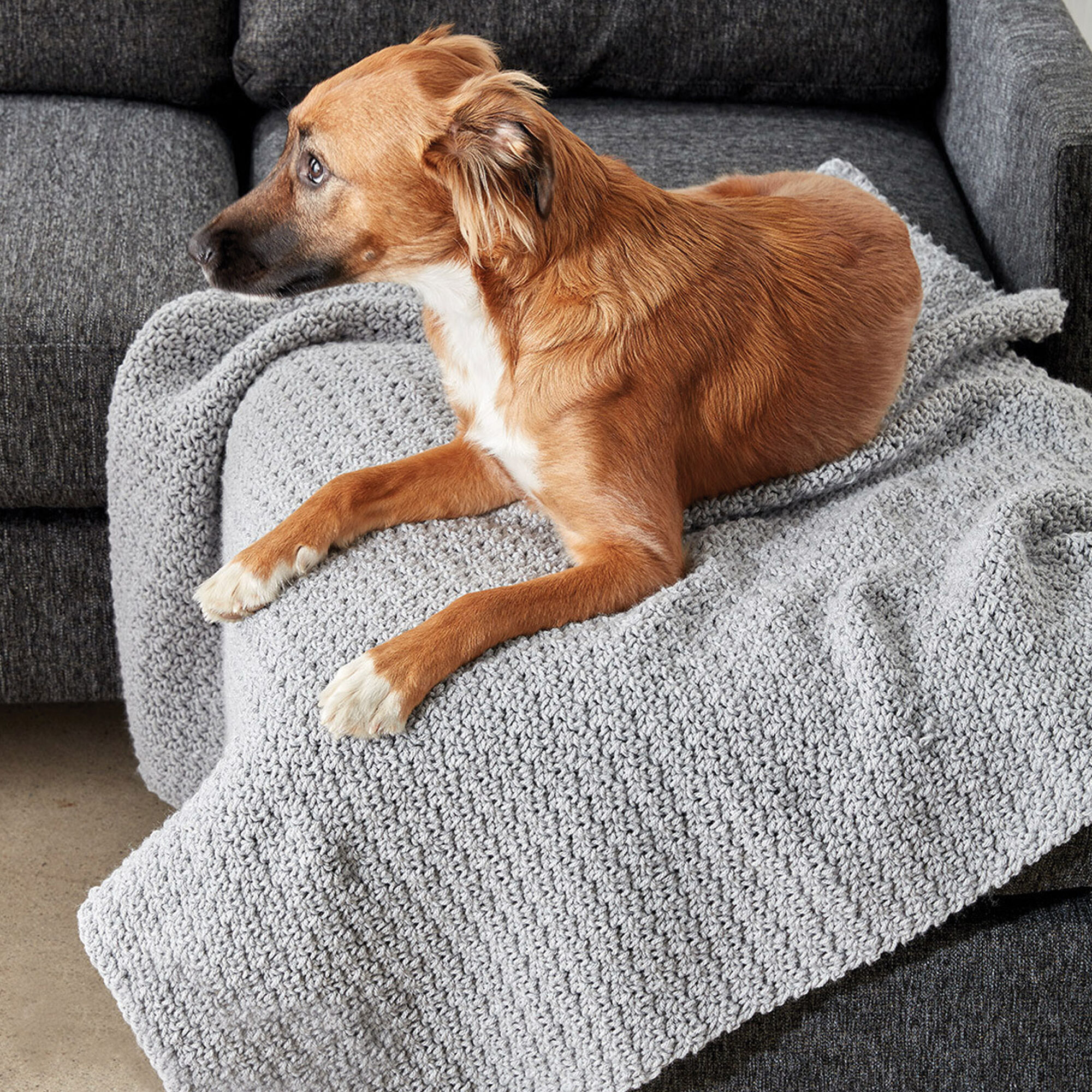 Caron Crochet Snuggle Pet Blanket, Dog | Yarnspirations
