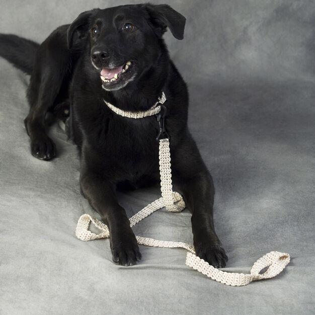 Red Heart Dog Leash & Collar