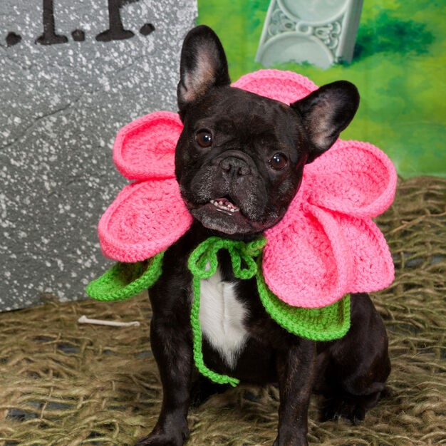 A dog wearing pink flowery costume
