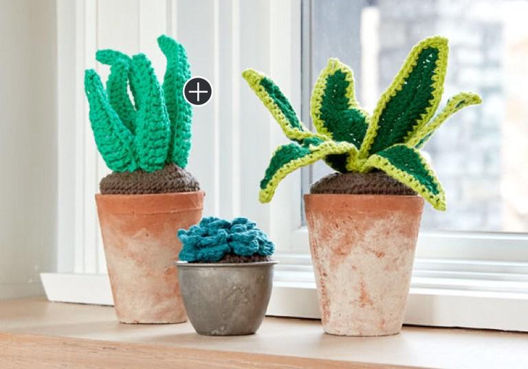 Easy Crochet Succulents